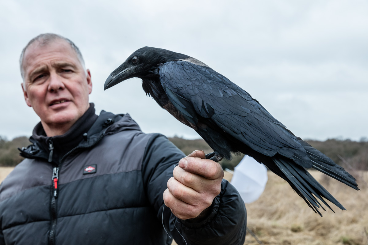 Anthony Bloom with one of his crows